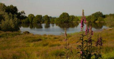 Betchcott Lake