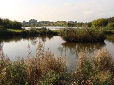 Westlands Lakes